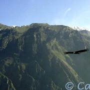 Canocota, Le Geiser du Pinchollo, Cabanaconde & Le Canyon du Colca